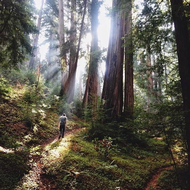Человек в кадре (в лесу)