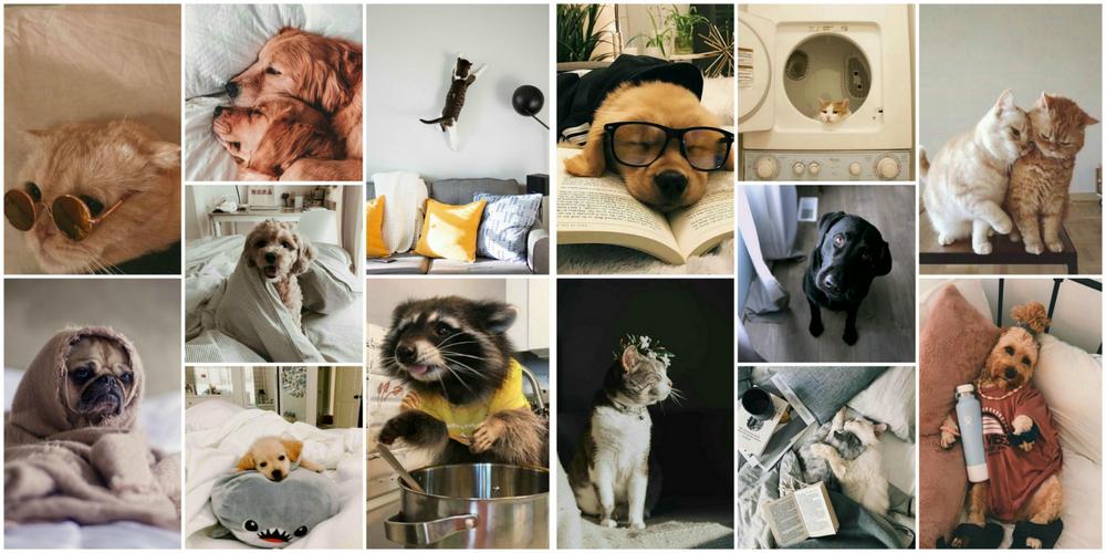 котики милые фотографии