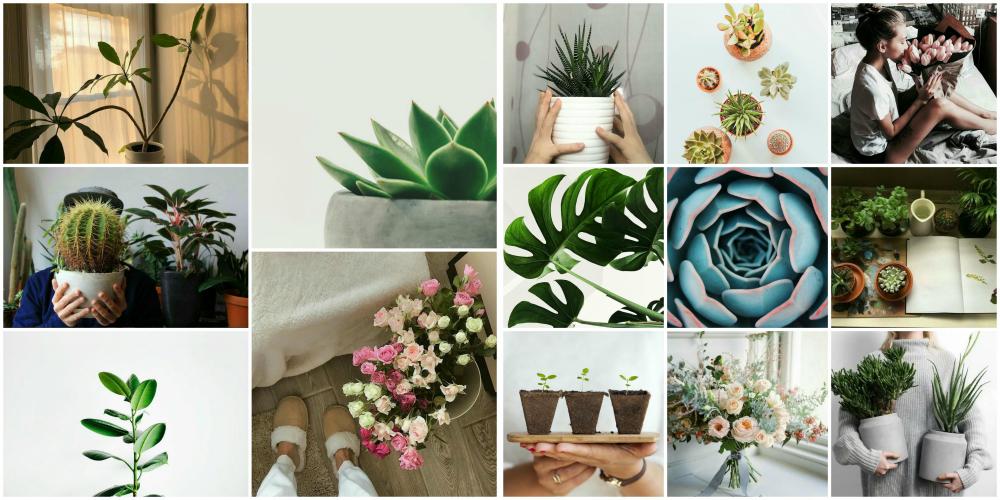 как красиво снять домашние растения