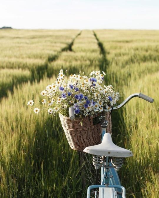 цветы в корзинке на велосипеде
