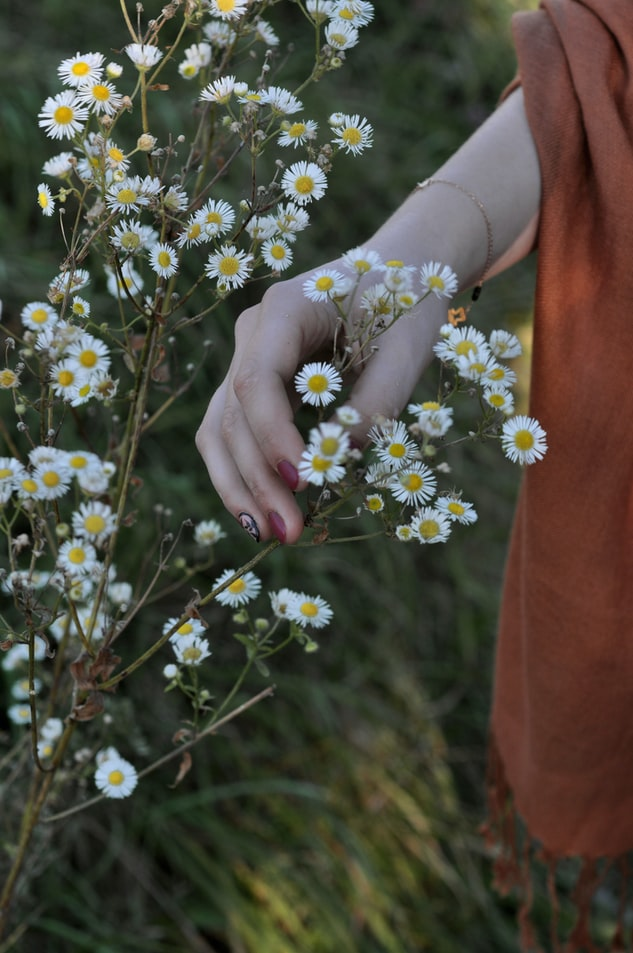 красивое фото с руками и кустовыми ромашками