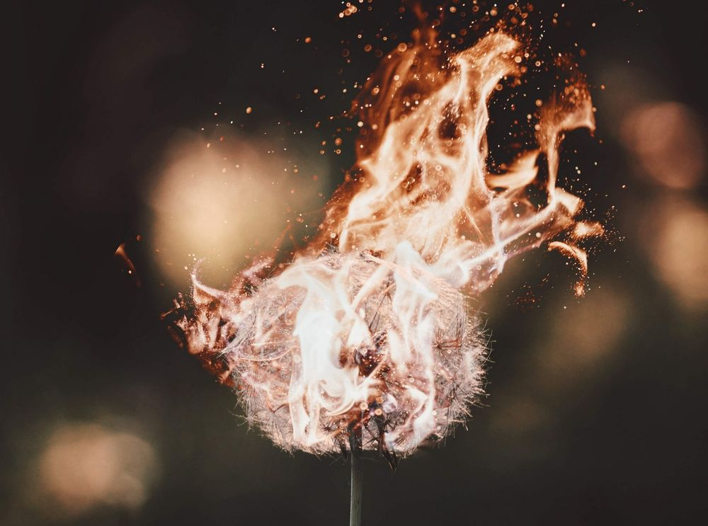 горящий одуванчик фото