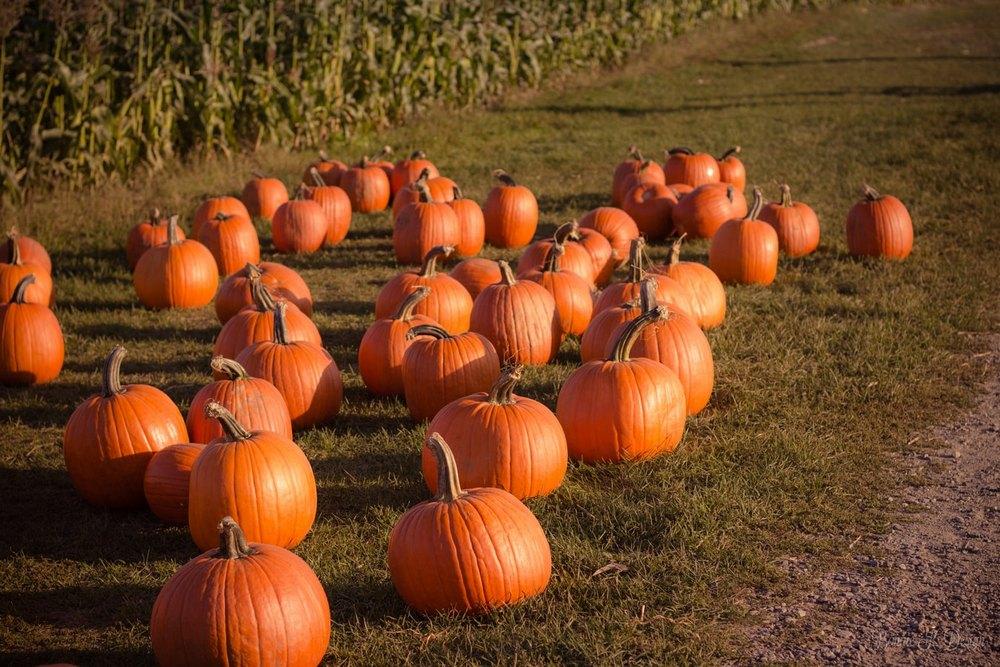 Идеи для фото с тыквами осенью