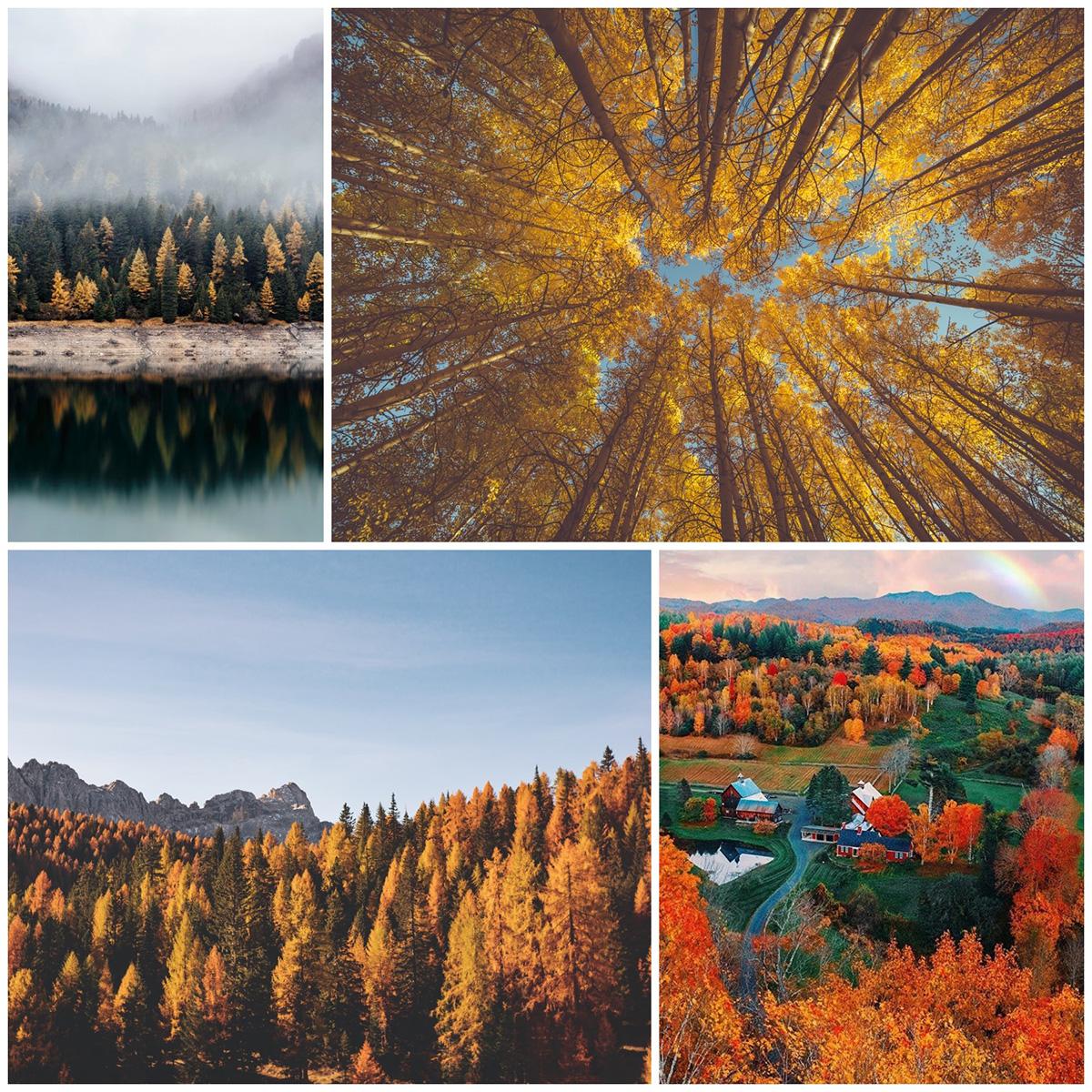 Идеи осеннего пейзажа