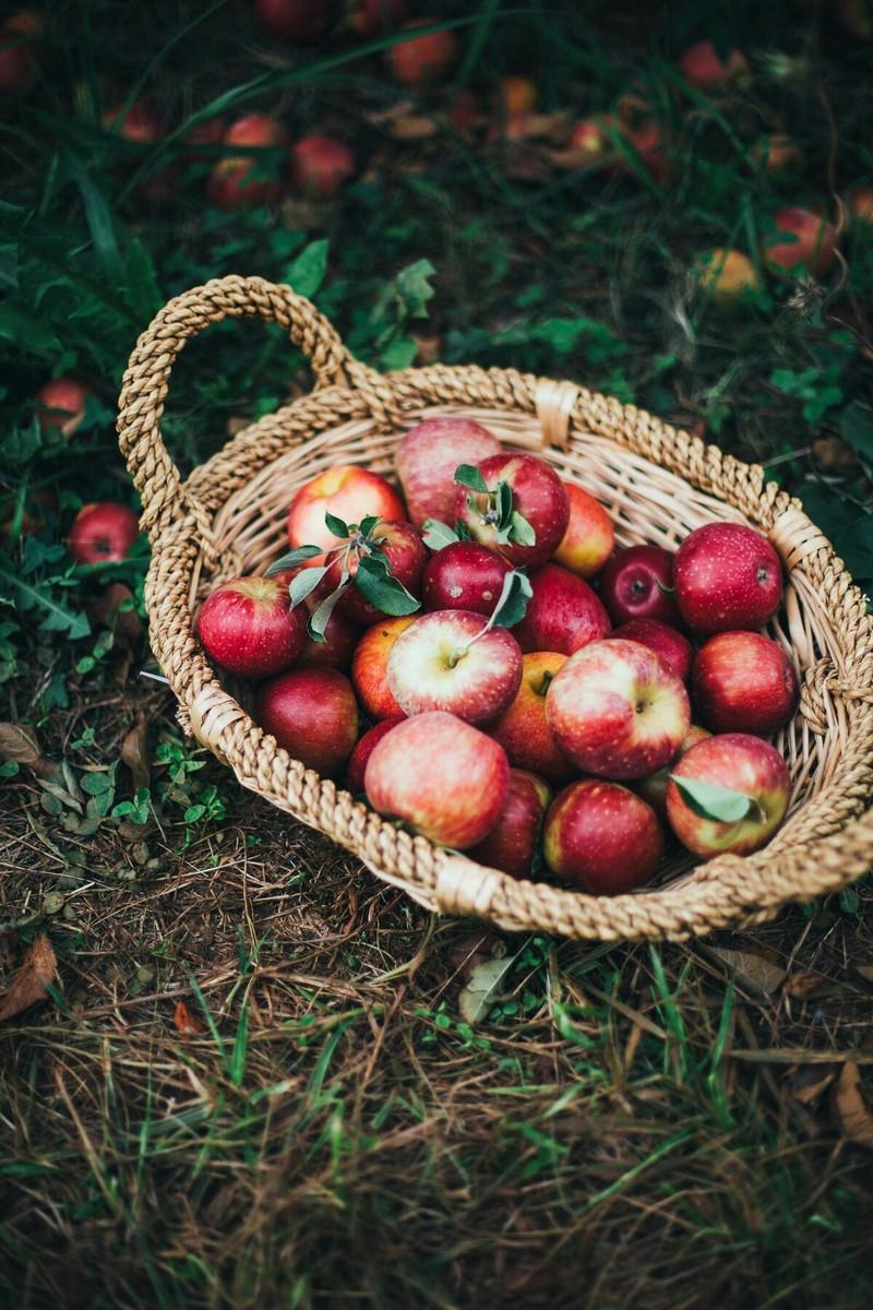 Как красиво сфоткать яблоки осенью