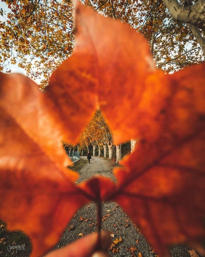 как креативно сфоткать листья осенью