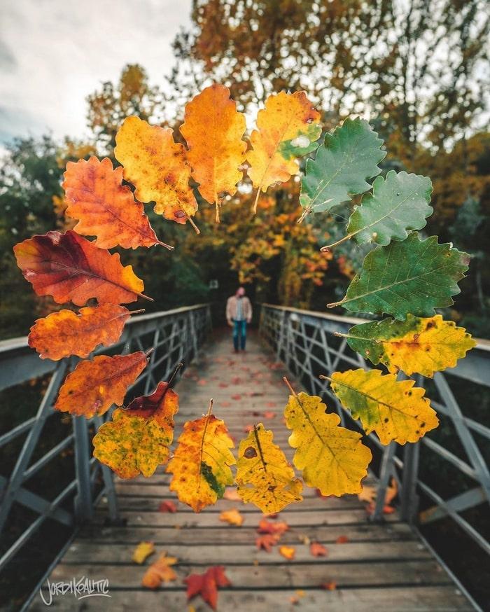 как круто и необычно фотографировать осенние листья