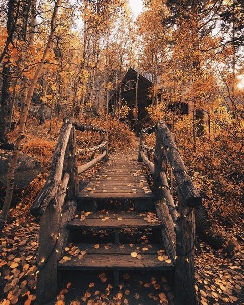 Осеннее дерево на фотографии