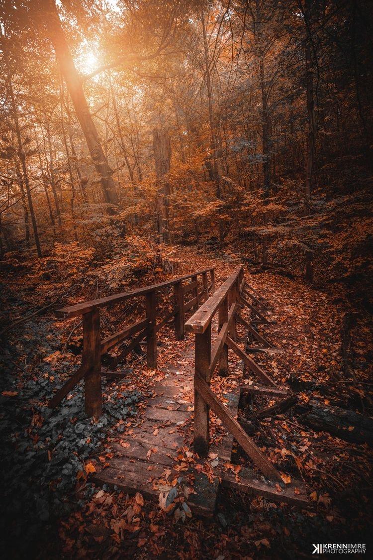 Осенний пейзаж с мостом