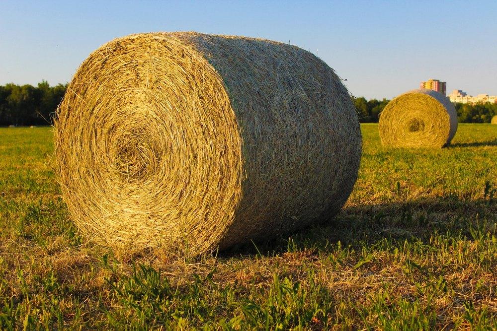 Как прикольно сфоткаться в поле осенью