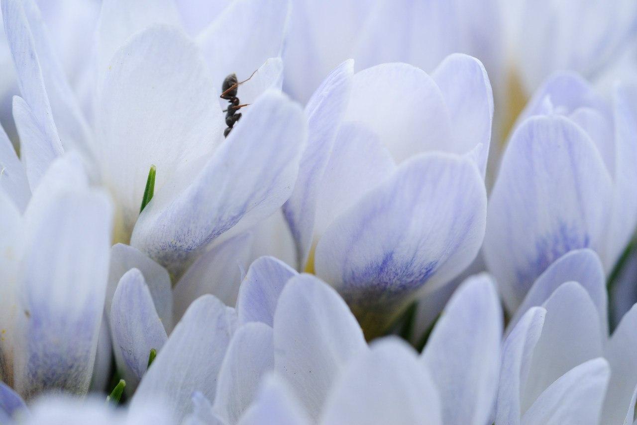 список дел на весну
