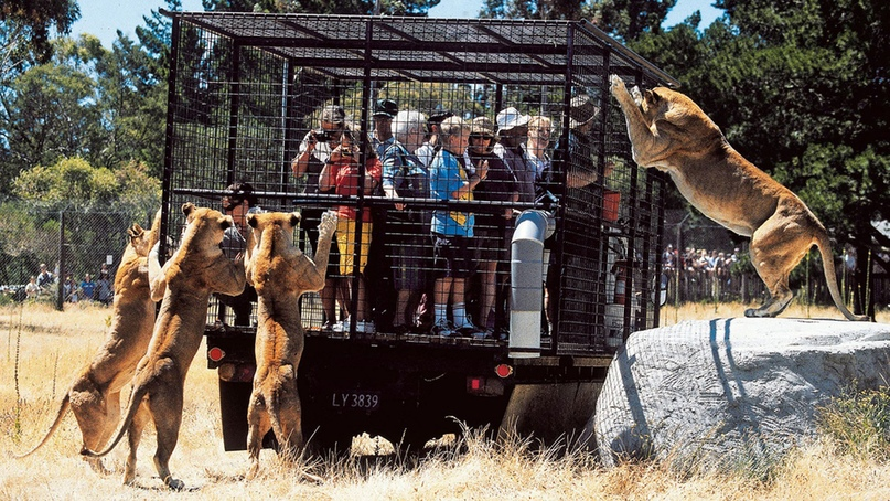 Котики против цирков и зоопарков